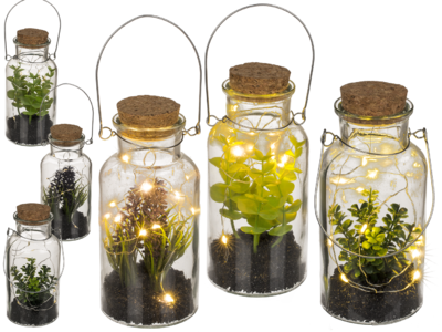 Decoration plant in glass for hanging &